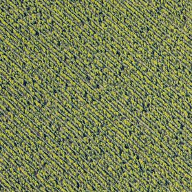 Stunning Aerial Photographs by Mitch Rouse Capture the Precise Patterns of Farmland