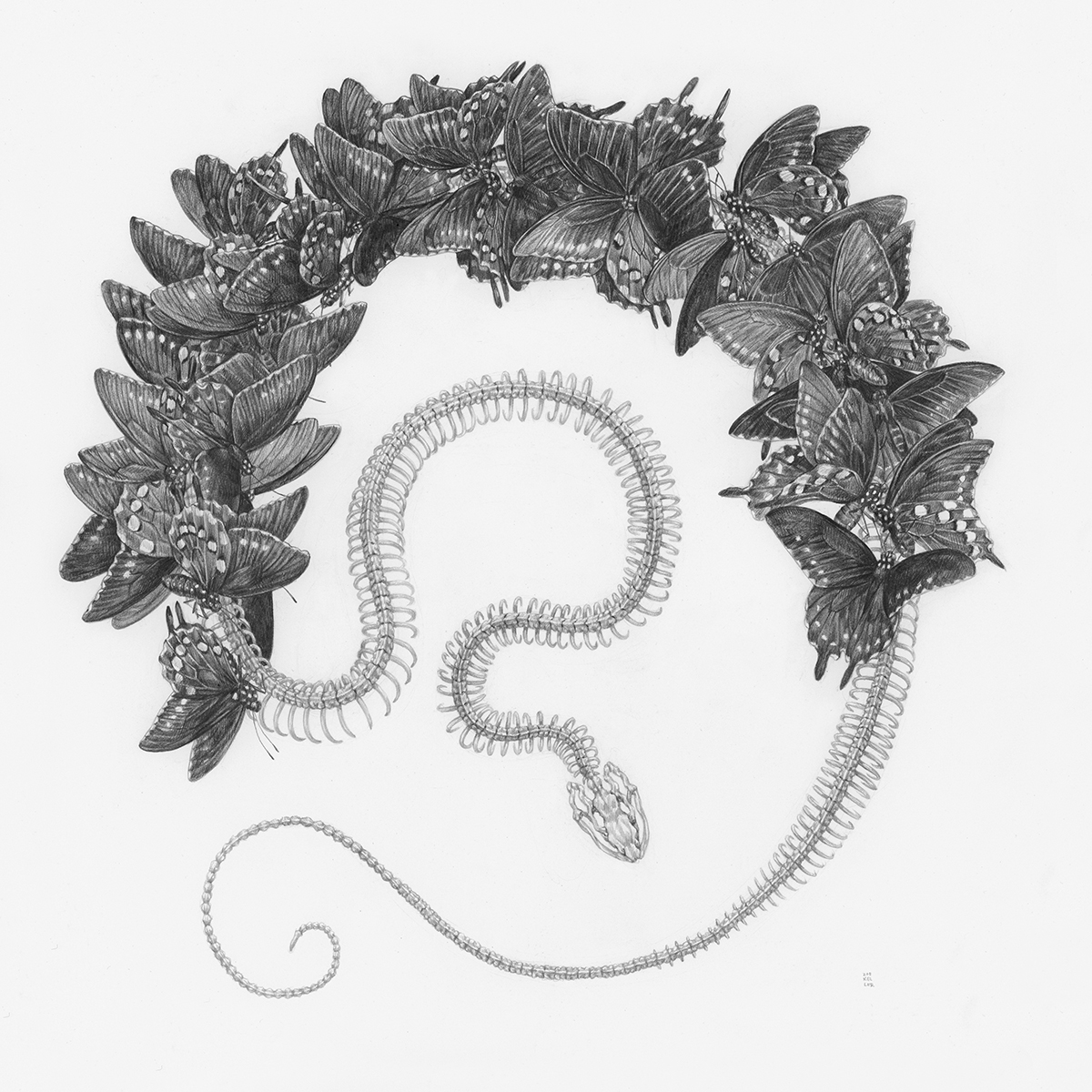 Sinuous Snakes, Insects, and Florals Intertwine in Graphite Illustrations by Zoe Keller