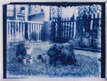 After Discovering a 120-Year-Old Time Capsule, Photographer Develops Two Cyanotypes of Cats