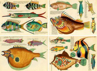 Page Through a Fantastical Compendium of the World's First Color Illustrations of Marine Life