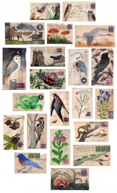 Painted on Vintage Postcards, Flora and Fauna Celebrate Farming Traditions and Wildlife of the Midwest
