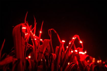 An Innovative Installation Embeds Lights into a Five-Acre Field to Spur Crop Growth