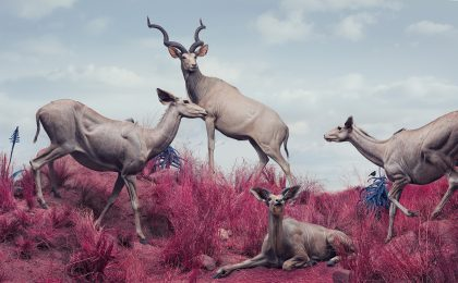 Fantastical Digital Paintings Position Wildlife in Unnaturally Colorful Environments